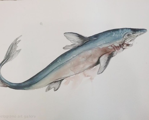 el-fooser-soy-sauce-shark